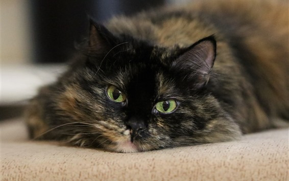 Обои Черная кошка, лицо, зеленые глаза, взгляд, туманность