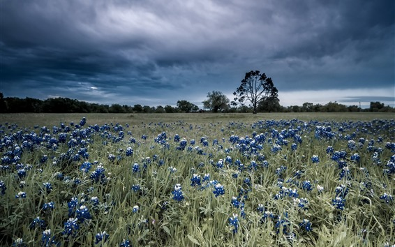 Wallpaper Blue flowers, grass, trees, thick clouds
