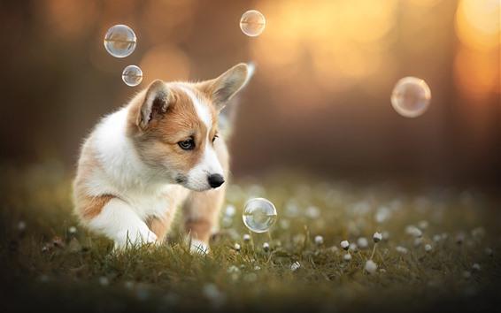 Wallpaper Cute puppy play bubbles