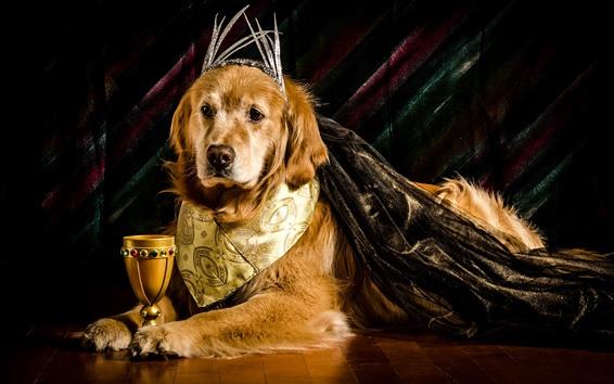 Обои Собака, король, корона