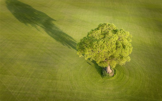 Wallpaper England, Yorkshire, meadow, tree, green, nature scenery