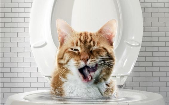 Wallpaper Funny cat, water, toilet
