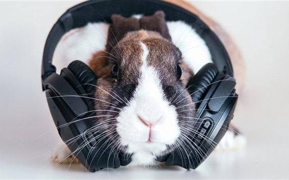 Wallpaper Funny pet, rabbit and headphones