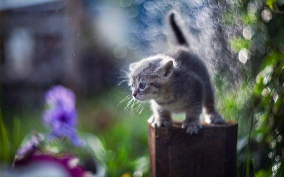Обои Пушистый котенок, пень, дымка, цветы