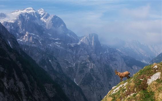 Fond d'écran Montagnes, moutons