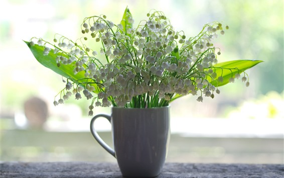 Wallpaper One cup of white flowers, lilies of the valley