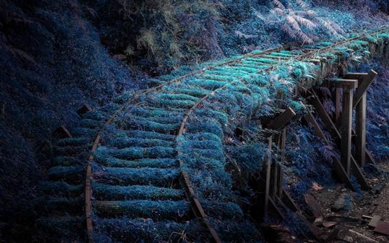 Fond d'écran Chemin de fer, herbe, mousse