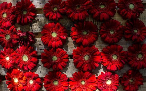 Papéis de Parede Algumas flores vermelhas gerbera, madeira
