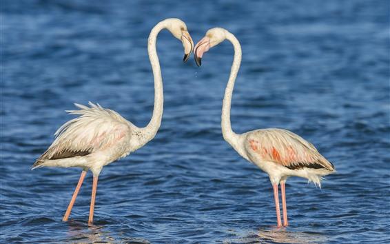 Papéis de Parede Dois flamingos, água, pássaros