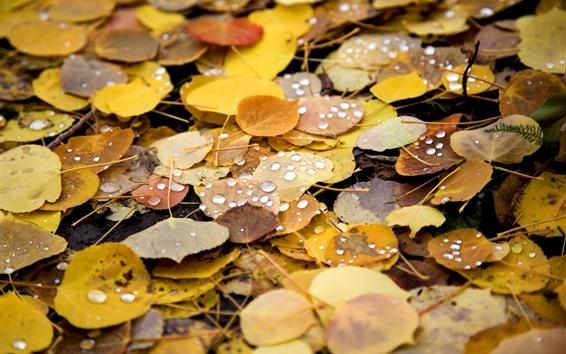 Papéis de Parede Outono, folhas amarelas, gotas de água, solo