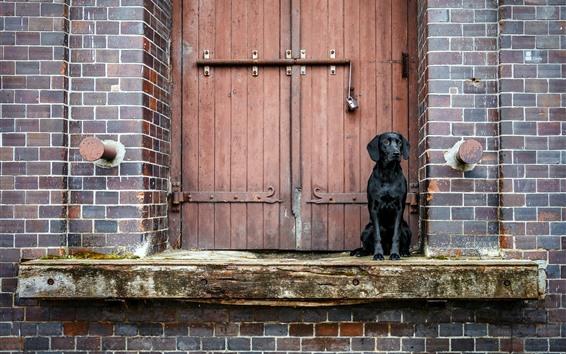 Papéis de Parede Cão preto, porta