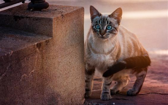 Papéis de Parede Olhos azuis gato, olhar, escadas