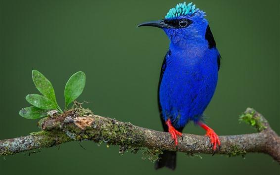 Обои Синее перо птицы, ветка дерева, листья