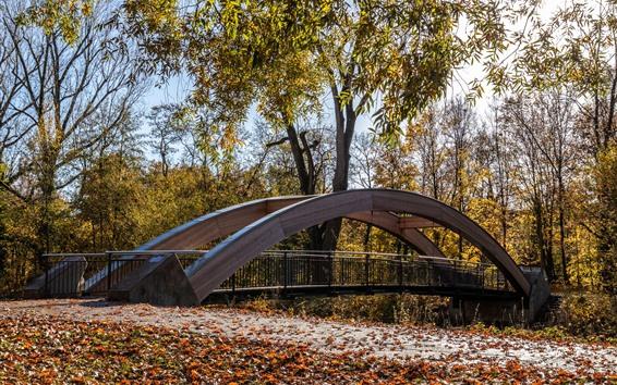Papéis de Parede Ponte, árvores, outono, parque