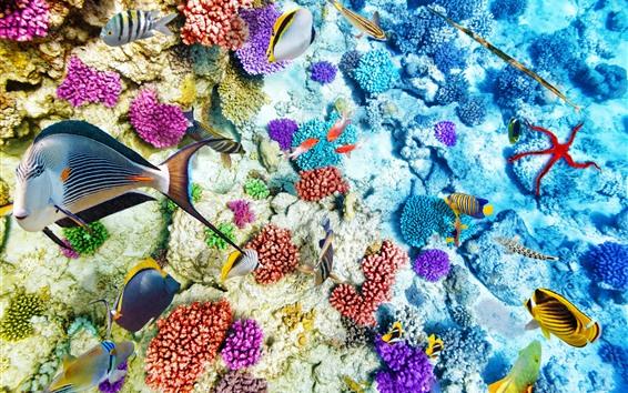 Обои Чистая вода, подводный, рыба, риф