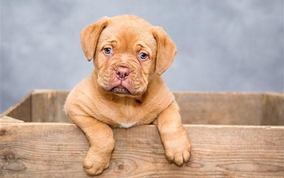 Fondos de pantalla Lindo perrito, caja