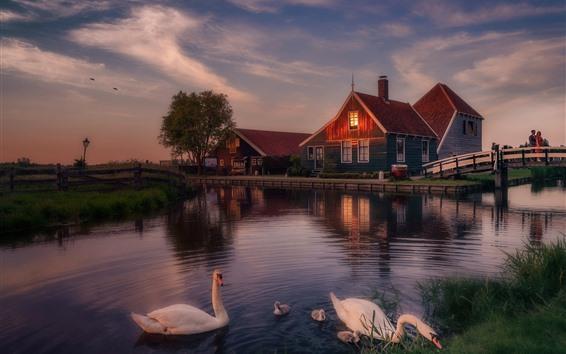 Обои Голландия, лебеди, мост, река, сумерки, вечер