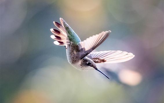 Papéis de Parede Beija-flor vôo, asas, nebuloso