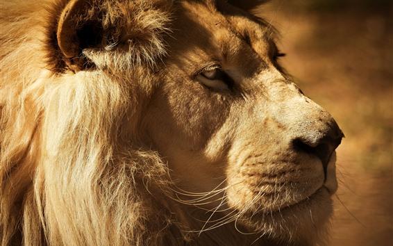Обои Лев, лицо, рот, глаза, грива