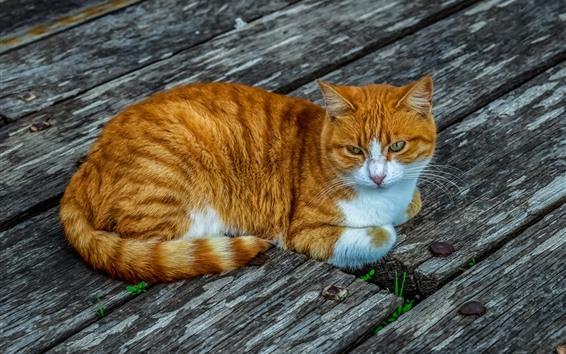 Papéis de Parede Resto de gato laranja, placa de madeira