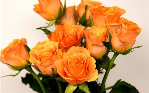 Papéis de Parede Rosas laranja, buquê, fundo branco