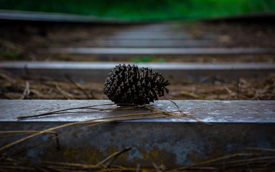 배경 화면 소나무 씨앗