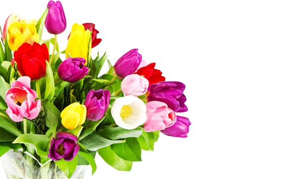 Wallpaper Purple, yellow, pink tulips, bouquet, white background
