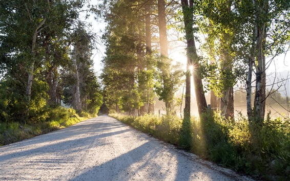Wallpaper Road, trees, sun rays, river, morning