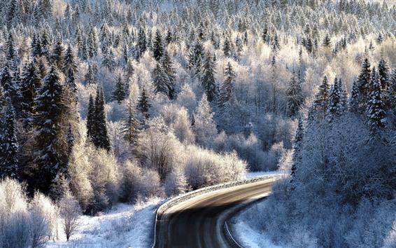 Wallpaper Road, trees, winter, snow, white