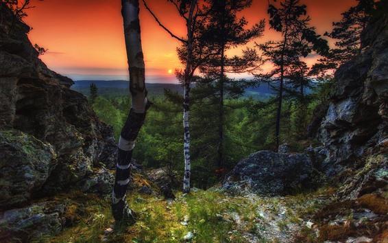 Обои Деревья, закат, пейзажи природы