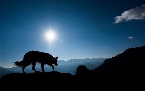 Papéis de Parede Lobo, montanhas, sol, silhueta