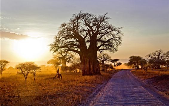 Обои Африка, деревья, дорога, солнце, утро, осень