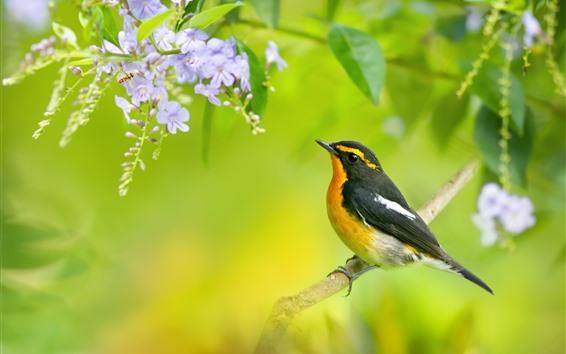 배경 화면 새, 꿀벌, 꽃, 나무, 봄