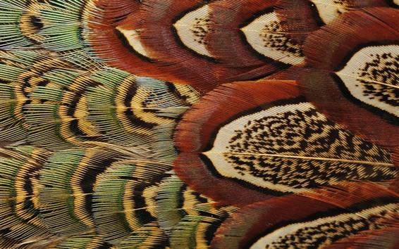 Wallpaper Bird feathers macro photography, texture