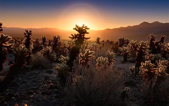 Wallpaper Cactus, desert, sunset