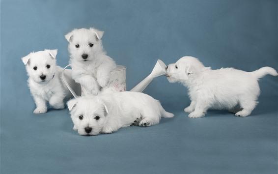 Papéis de Parede Quatro filhotes de cachorro brancos bonitos