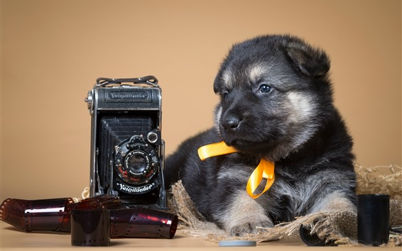 Wallpaper Cute puppy and camera