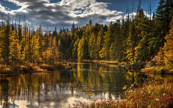 Обои Лес, река, деревья, осень, облака