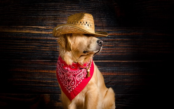 Wallpaper Funny dog, hat, scarf