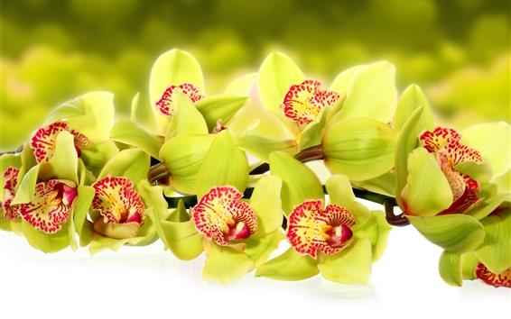 Fondos de pantalla Orquídea verde, primer plano de flores