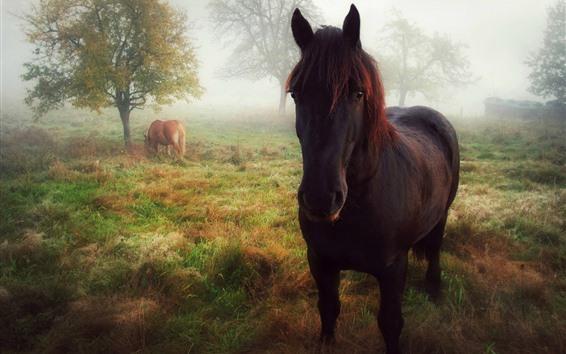 Обои Лошадь, вид спереди, взгляд, трава