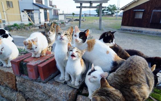 Обои Много кошек, смотри