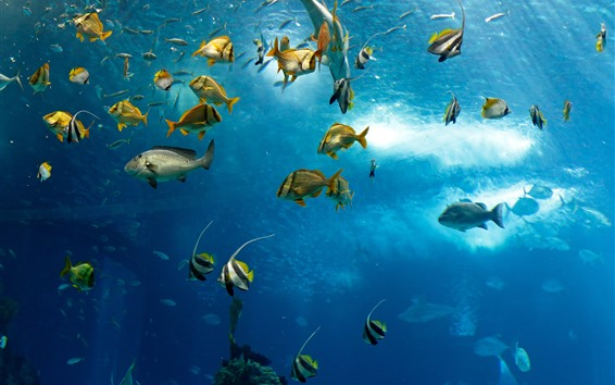 Papéis de Parede Muitos peixes, mar, debaixo d'água