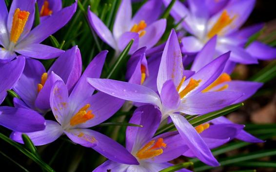 배경 화면 많은 분홍색 난초, 꽃, 꽃잎, 봄