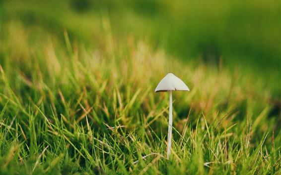 Papéis de Parede Cogumelo, grama verde, primavera