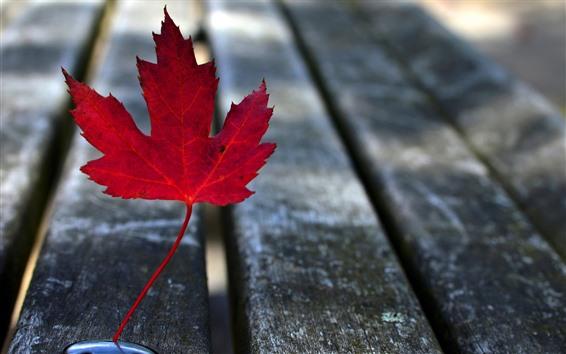 Papéis de Parede Uma folha de bordo vermelha, banco de madeira