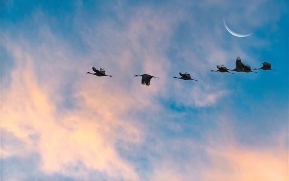 Wallpaper Some birds flight in the sky, moon, clouds