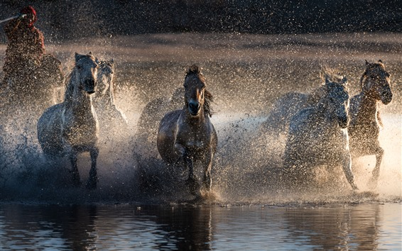 Wallpaper Some horses running in water, splash