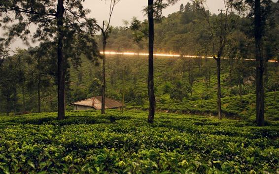 Wallpaper Sri Lanka, trees, hut, countryside, light line
