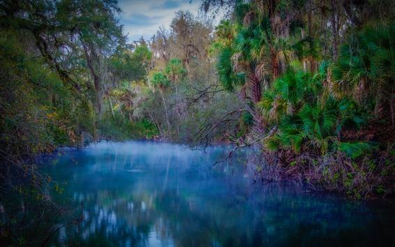 Papéis de Parede Árvores, rio, tropical